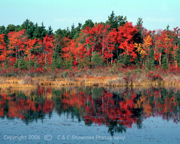 Autumn in the Pinelands